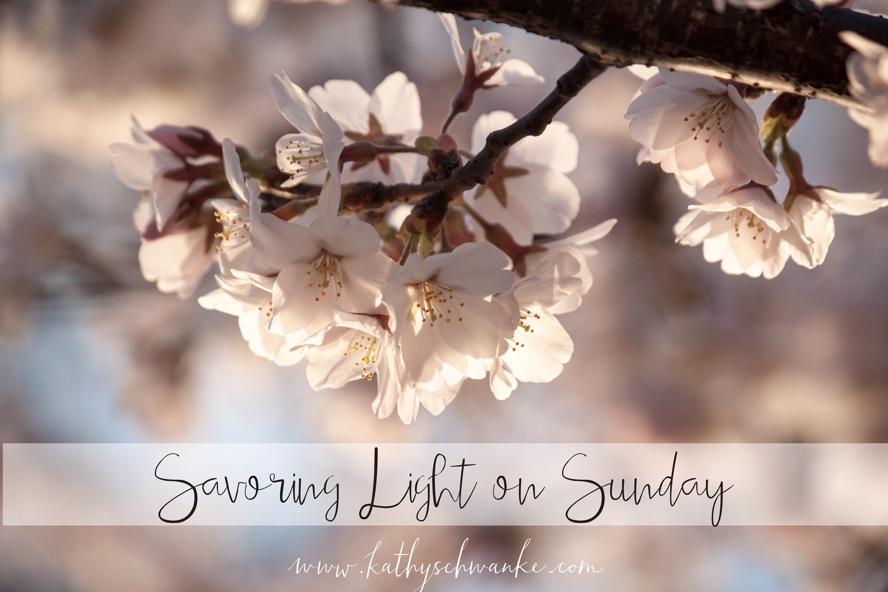 Savoring Light on Sunday